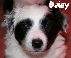 daisyklein.jpg