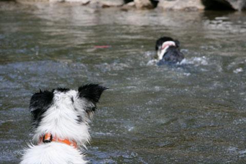 schwimmer.jpg