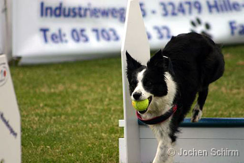 Flyball-Dfin