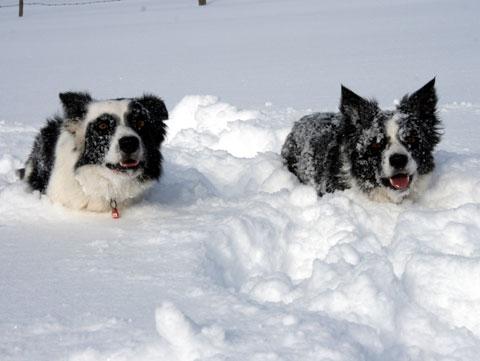 schneee.jpg