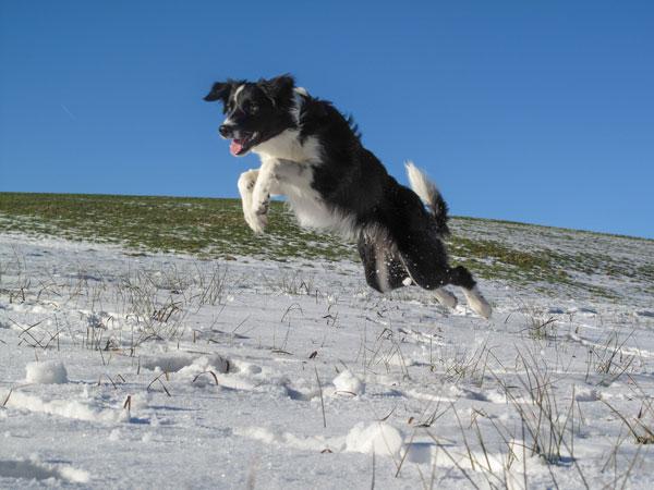 schneehunde_07kk